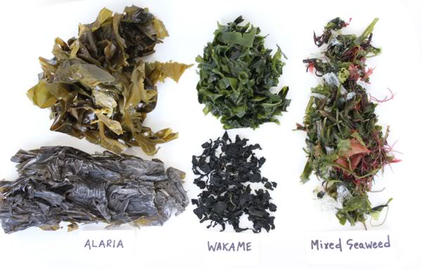 the two types of seaweed in scotland Seaweeds for umami flavour in the new nordic cuisine scotland and iceland two types of water were used for seaweed extracts.